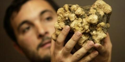 У латвии можна успішно вирощувати трюфеля