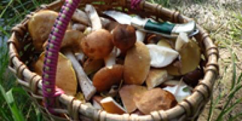 У лісах регіону з'явилися перші весняні гриби