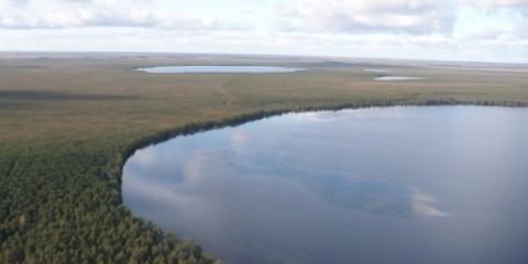 В новгородській області відтворені три заказника
