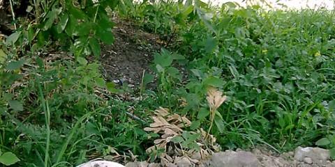 У Пензі поряд з смітником виросли гриби