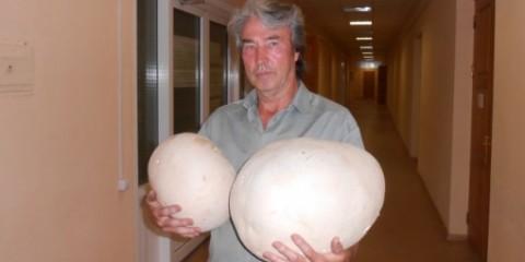 В саду у кіровчанін ростуть величезні гриби