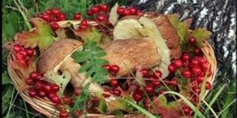 У томської області планують збирати більше грибів та ягід