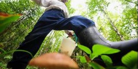 Воронежці будуть збирати гриби на швидкість